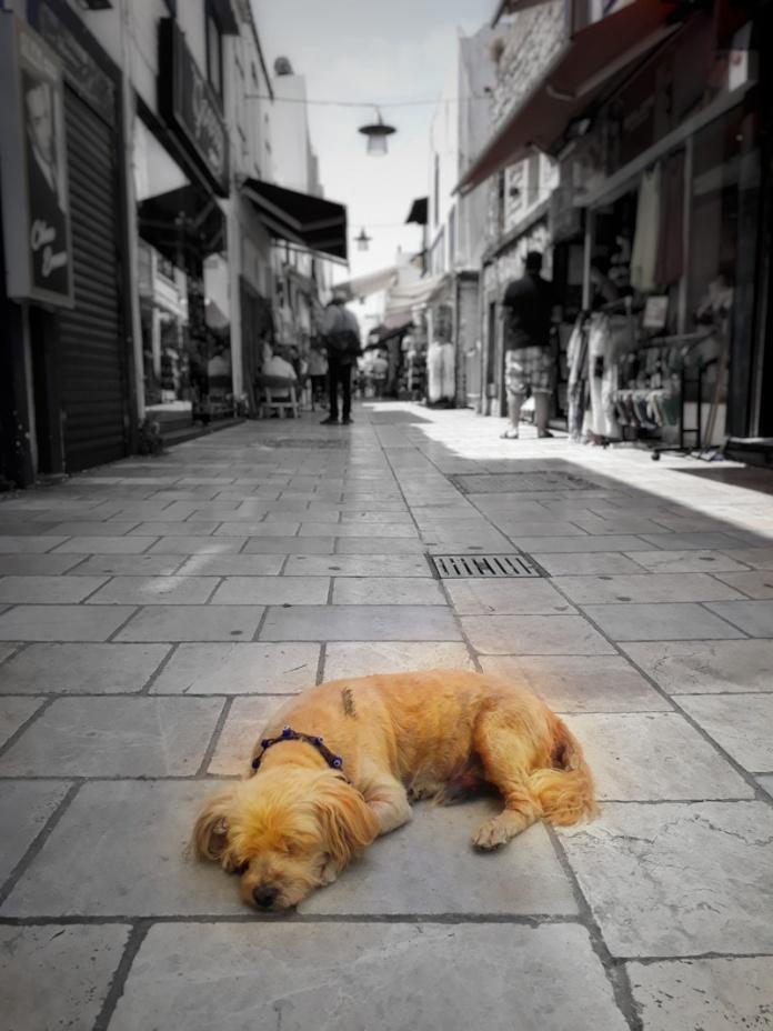 bodrum sokak hayvanları